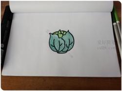 卷心菜的画法步骤图文教程