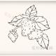 简单好看的草莓简笔画画法步骤教程