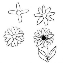 七中常见花卉的简单画法教程