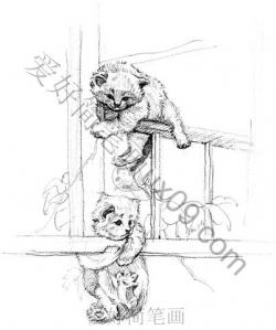 绘画基础入门教程,猫简笔画步骤图