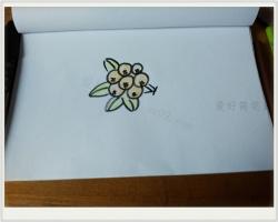 桂圆简笔画教程图片带颜色