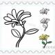 三种简单的花朵简笔画教程图片