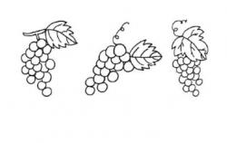 葡萄简笔画图片