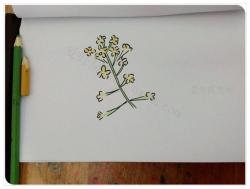 油菜花简笔画的画法教程