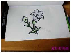 一步一步教你画桔梗花