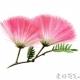 一步一步教你画合欢花 彩铅合欢花教程