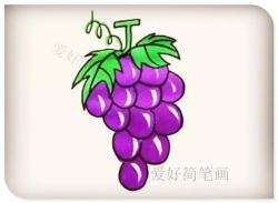 简笔画一长串葡萄画法