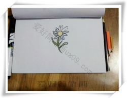 菊怎么画漂亮又简单,雏菊简笔画教程