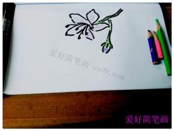 羊蹄甲花朵简笔画图文教程