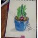多肉植物简笔画 彩色