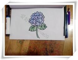 怎么画紫丁香花简笔画