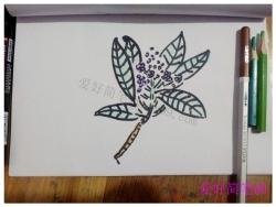 一枝香樟树花简笔画教程