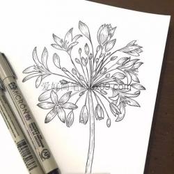 超漂亮的花朵简笔画大全