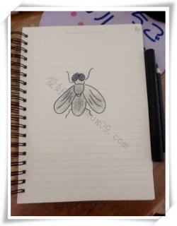 苍蝇的简笔画怎么画-苍蝇简笔画教程图片