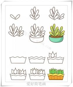 可爱的多肉植物简笔画画法教程大全
