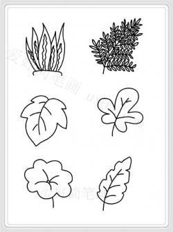 最新画法的各种树叶简笔画大全