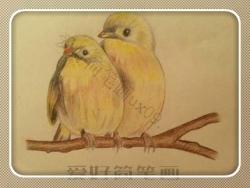 彩铅手绘小鸟简笔画