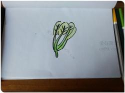 青菜画法简笔画图片